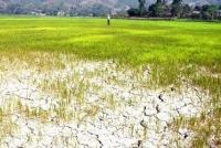 Một số vùng ở Lào bị hạn hán