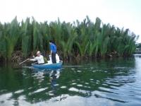 Quảng Ngãi là địa phương có diện tích rừng ngập mặn lớn