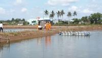 Bùn phù sa lắng đọng trong ao nuôi trồng thủy sản trong quá trình nạo vét là nguồn gây ô nhiễm chính. Ảnh: MH
