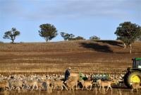 Cảnh khô hạn trên cánh đồng tại Duri, New South Wales, Australia ngày 7/8/2018. (Ảnh: AFP/TTXVN)
