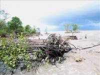 Rừng ngập mặn và nhà dân ở xã Khánh Tiến, huyện U Minh bị sóng biển đánh trôi. Ảnh: Vũ Sinh/TTXVN