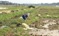 Nông dân huyện Sóc Sơn lấy nước gieo cấy vụ Xuân 2019