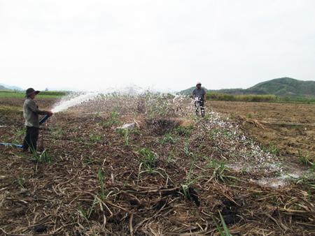 Khánh Hòa: Tiết kiệm nước, chủ động phòng, chống hạn