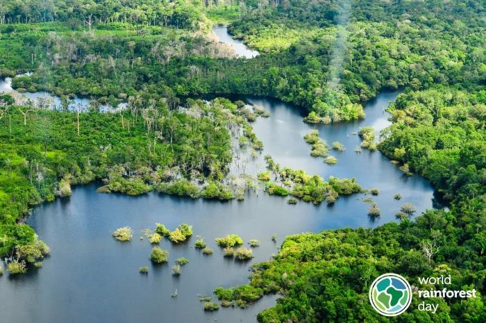 Ngày Rừng nhiệt đới thế giới 22.6: Rừng nhiệt đới cần được bảo vệ - Ngay bây giờ và mãi mãi